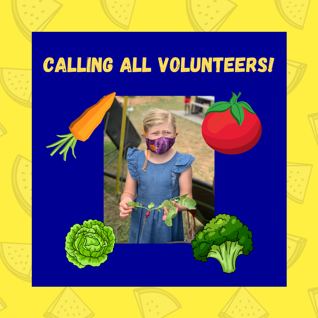masked second grade student holding a radish from BHE garden. Calling all volunteers!